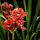 Orchid2 by macragraphics
