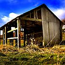 Old Cow Shed (Color) by Trevor Patterson