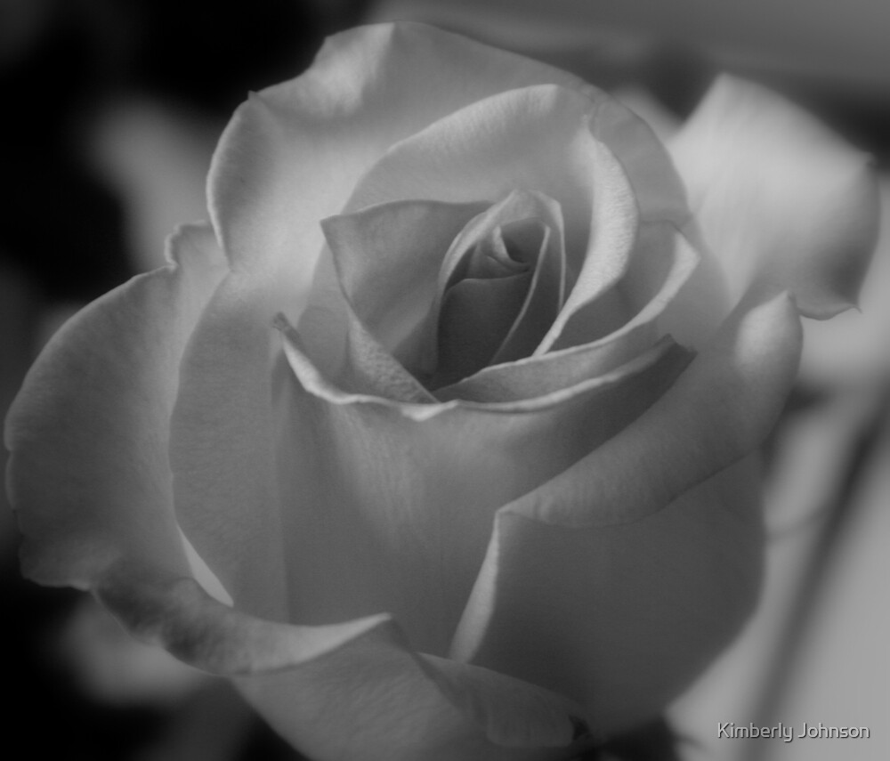Rose in Black and White by Kimberly Johnson