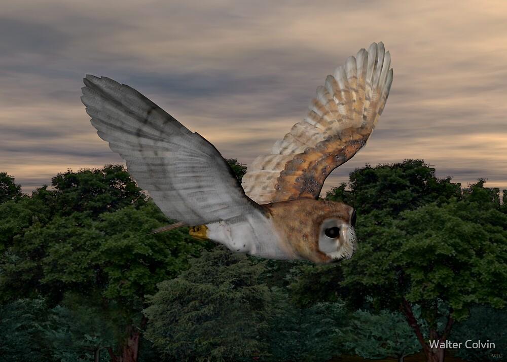 Barn Owl #2 by Walter Colvin
