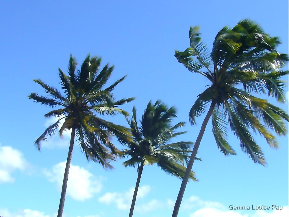 palms by Gemma Louise Pap