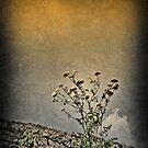Little flowers by Kurt  Tutschek