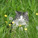 Cat In The Grass by Martha Medford