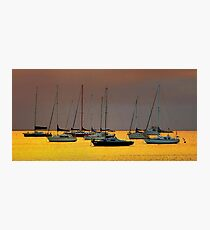 0464 Floating on a golden base - Geelong Photographic Print