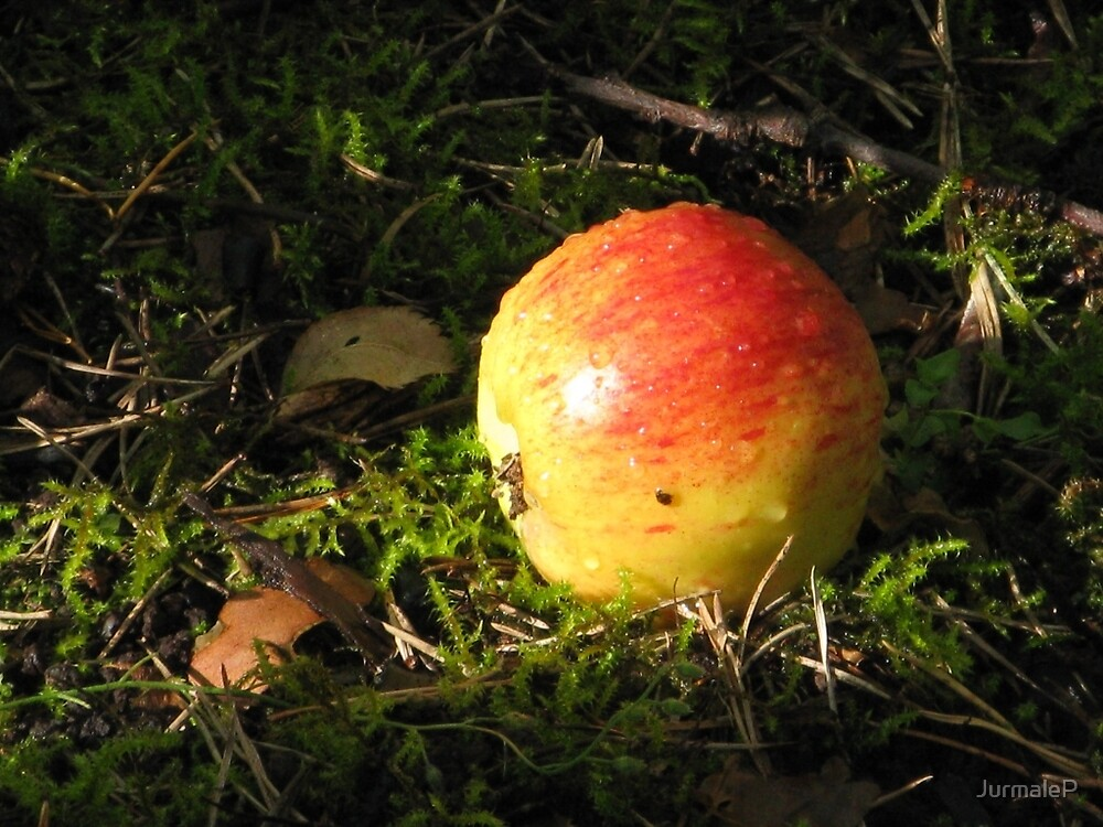 """""""AN APPLE A DAY...."""". by JurmaleP"""