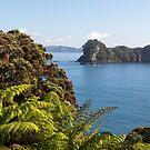 Motueka Bay, Coromandel Peninsula by Kimball Chen