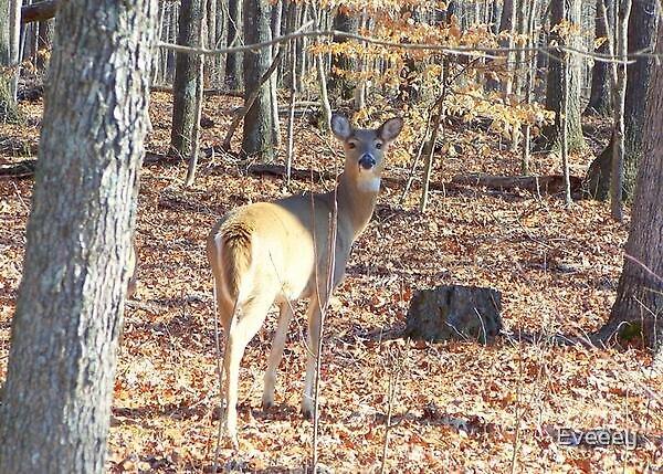 Lone Deer by Eveeey