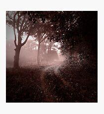 Misty Track Photographic Print
