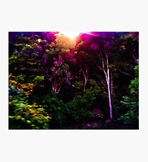 If u go out in the bush today Photographic Print