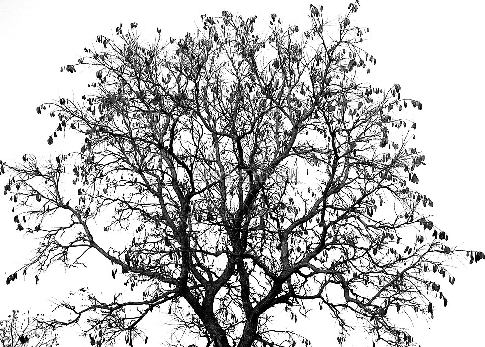 B&W Autumn Tree by Erika Sturgill