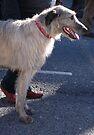 St Patricks Day Irish Wolfhound by ragman