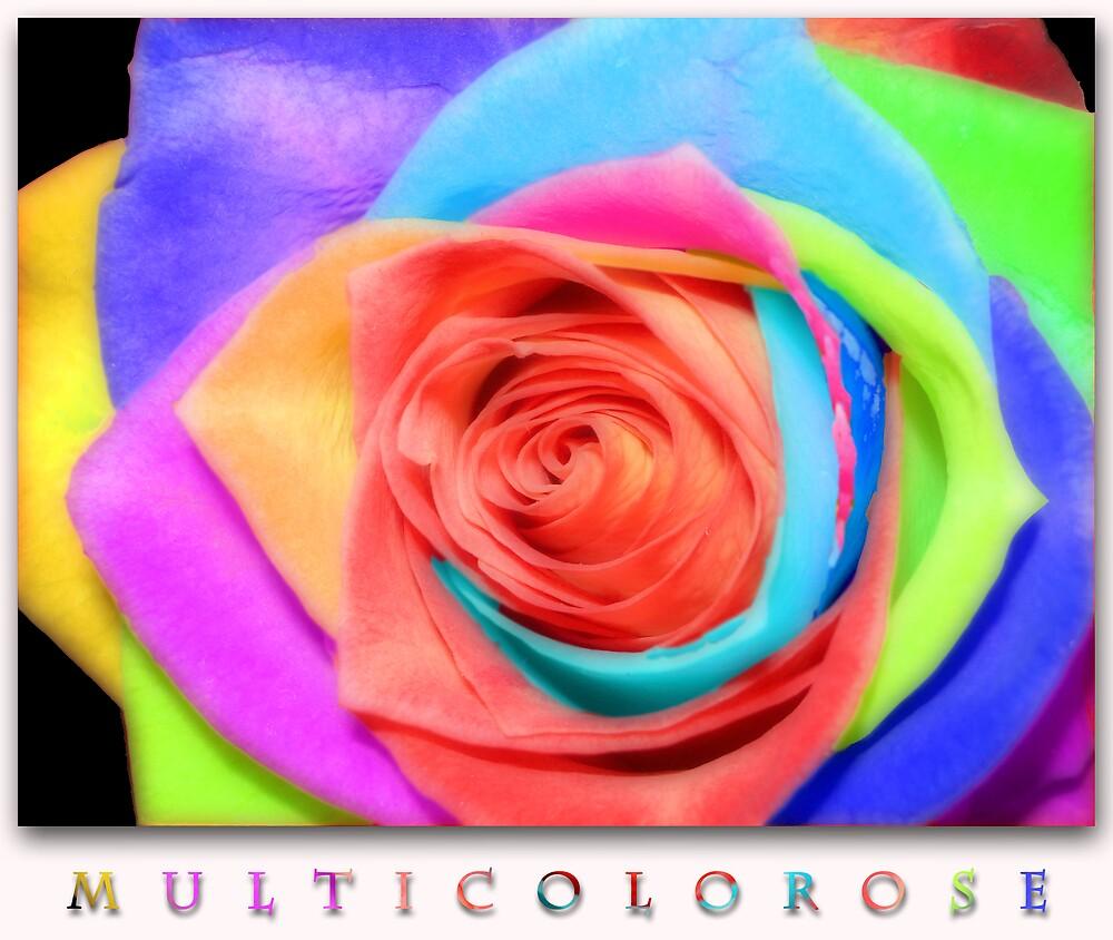 MULTICOLOROSE by karmadesigner