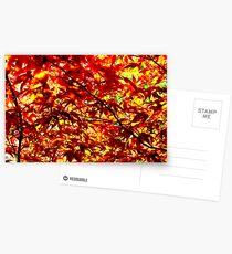 Acer Postcards