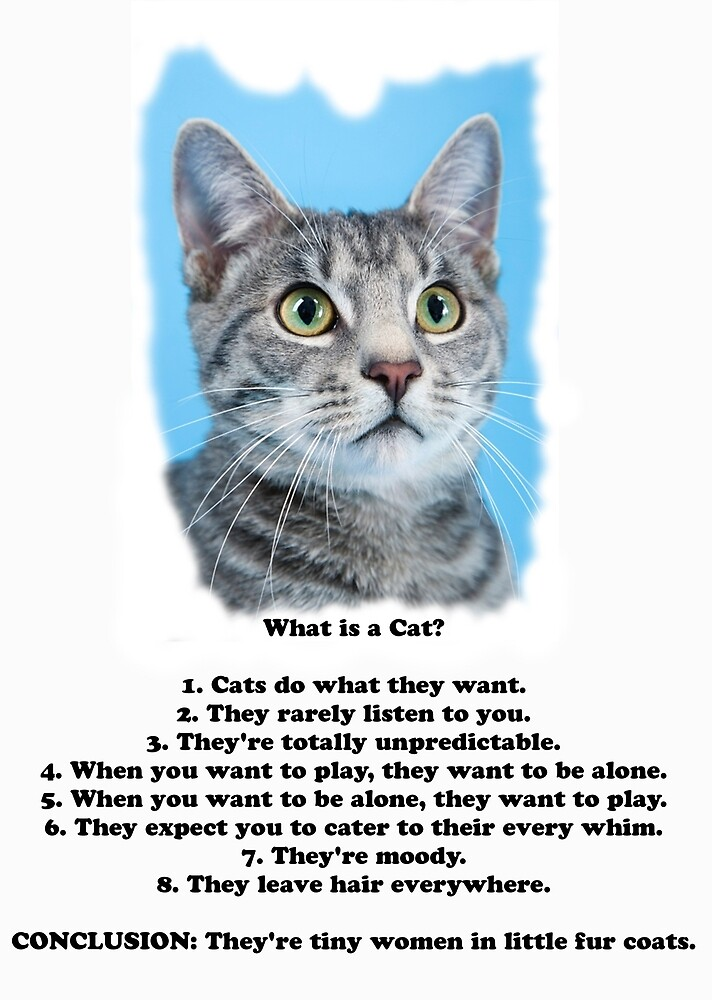 What are Cats? by IowaArtist
