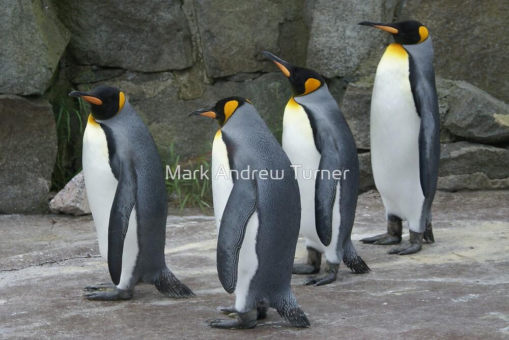 Penguins by Mark Andrew Turner