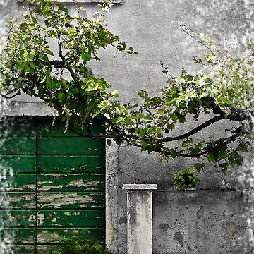Dalmatian House by Dujashin