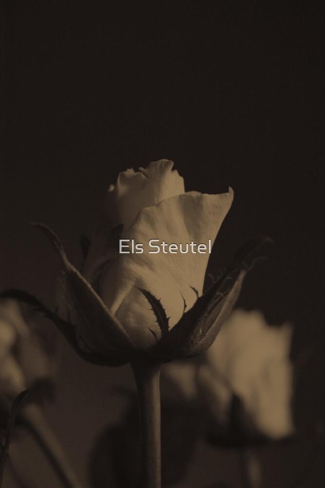 SepiaRose 1 by Els Steutel