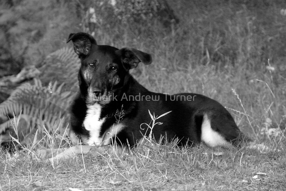 Cool Dog by Mark Andrew Turner