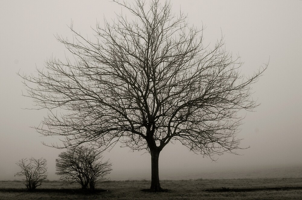 Fog and Tree by Robert Baker