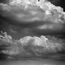 Willows and clouds II (monochrome) (Schalkwijk, Utrecht) by photogenicgreen