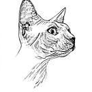 Sphynx  Cat by Alberto Marinelli