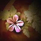 antique flower by JennySmith