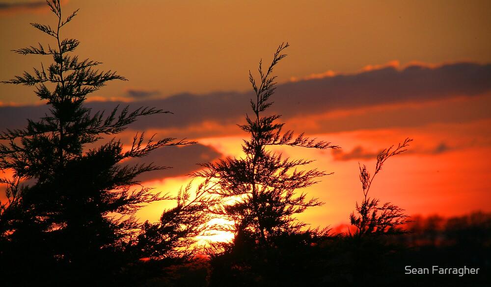 TREE TOP SUNDOWN by Sean Farragher