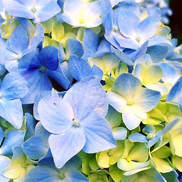 Blue Hydrangeas by OneDayArt