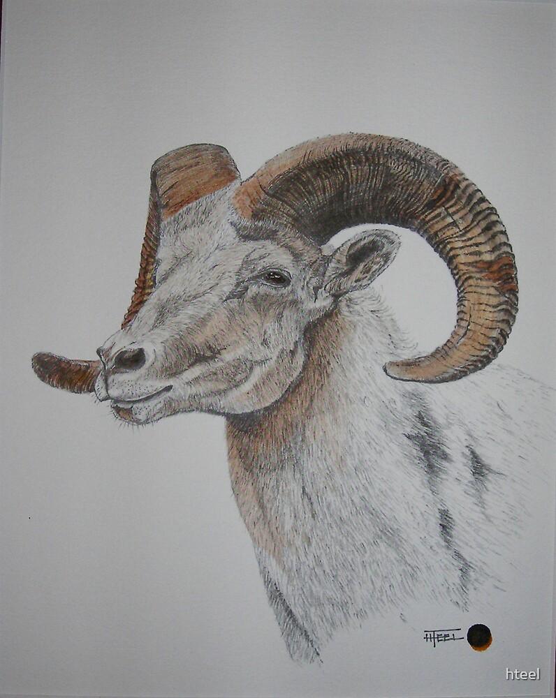 Big Horn by hteel