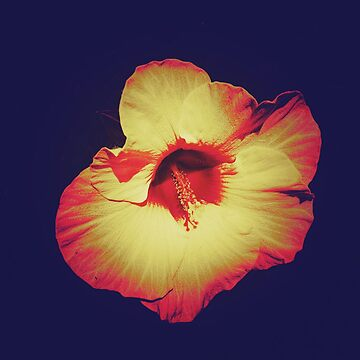 Floral Gift - Single Hibiscus Design by OneDayArt