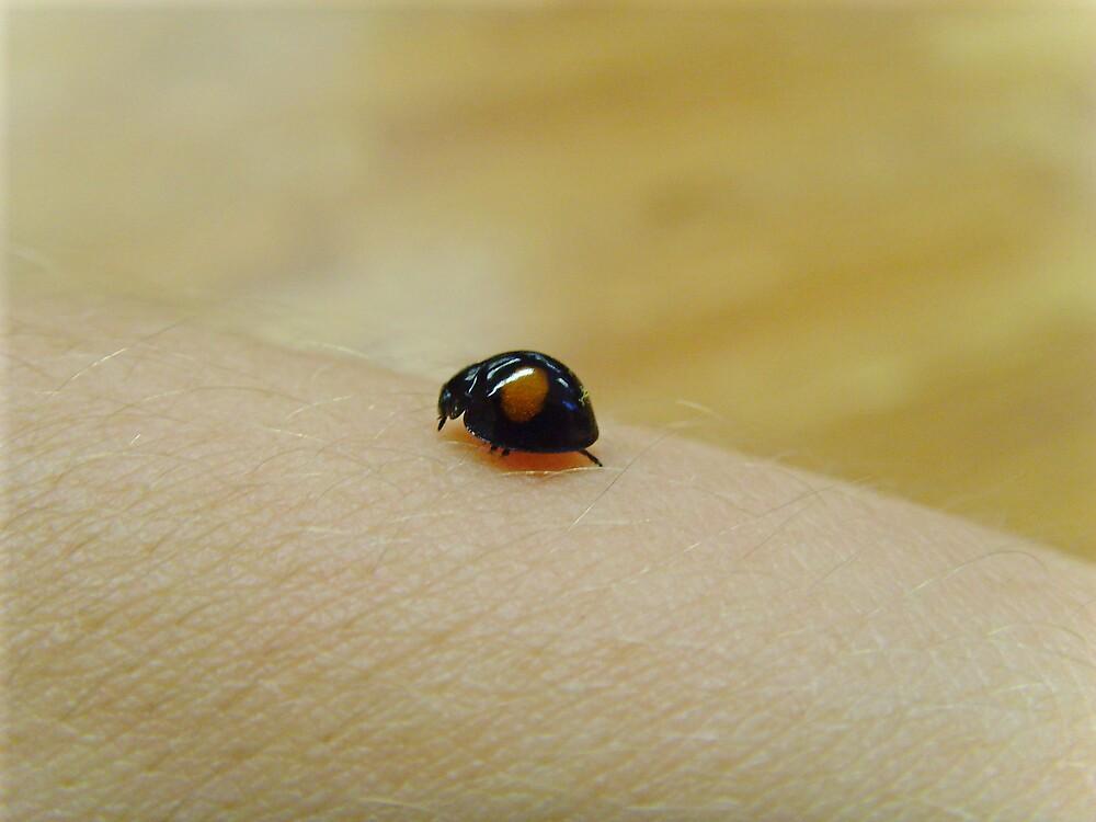 lady bug by photolvr761