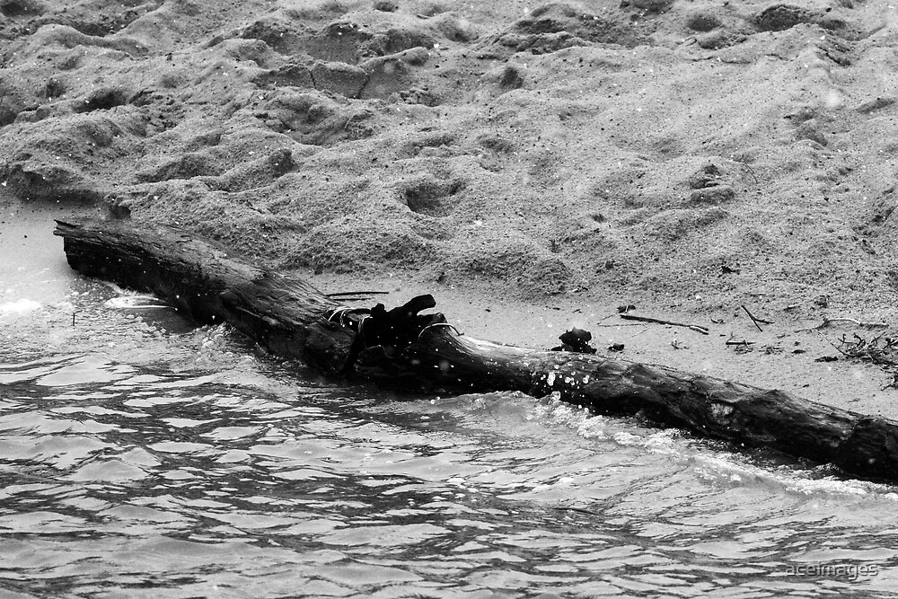 drift wood by aceimages