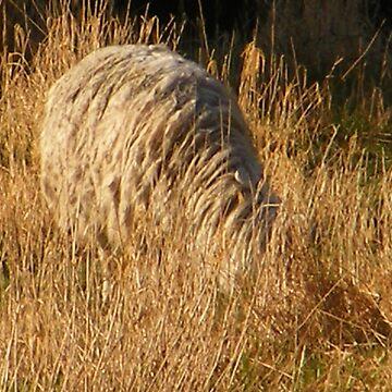 Lama by sierrajeni