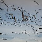 The Birds - Shades of Alfred Hitchcock!   by John  Kapusta