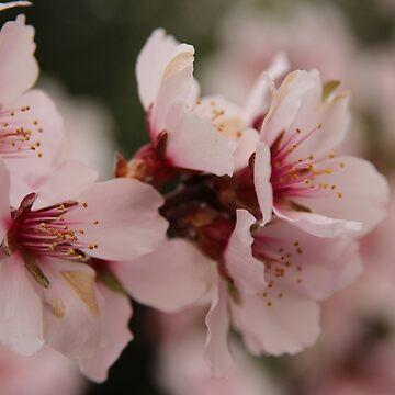 Eternal spring by Chari-ot