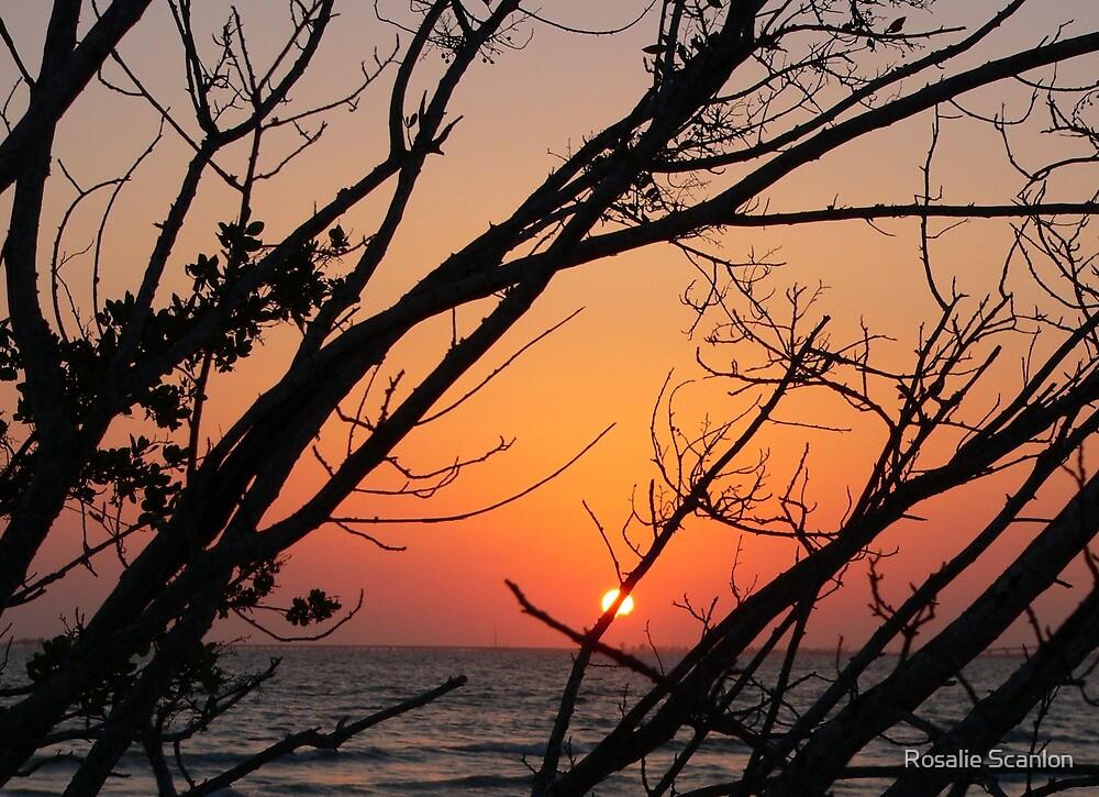 Sunset at Bowdage Point by Rosalie Scanlon
