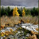 A Golden Moment in the Larch Bog by Wayne King