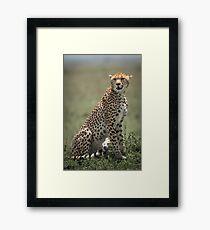 Resting Cheetah Framed Print