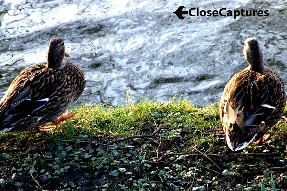 Duck Conversation by Emma Close