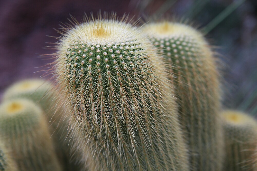 Prickly Plant by Lori27