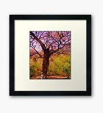 Olmos Park Framed Print