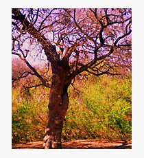 Olmos Park Photographic Print
