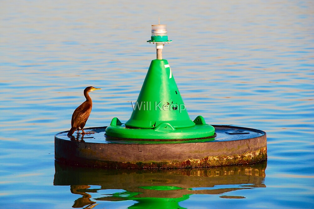 Bird And Buoy by Will Kemp