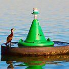 Bird And Buoy by Will Kemp