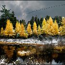 Geese Over Tamarack by Wayne King