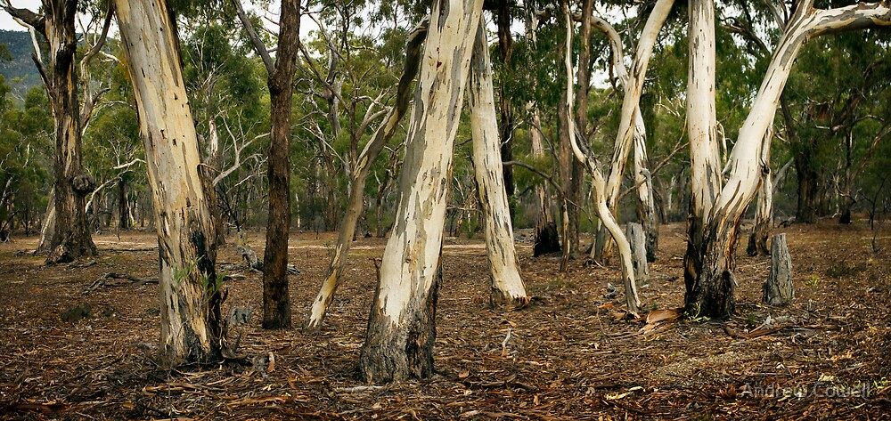 eucalyt stand by Andrew Cowell