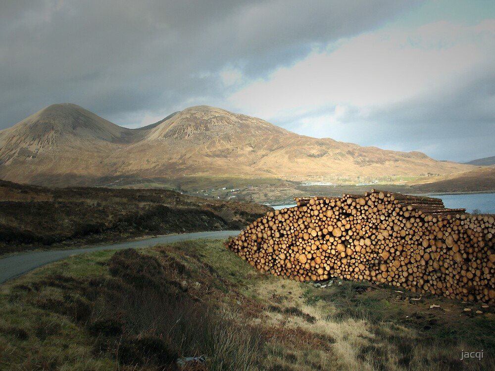 Landscape With Logs by jacqi