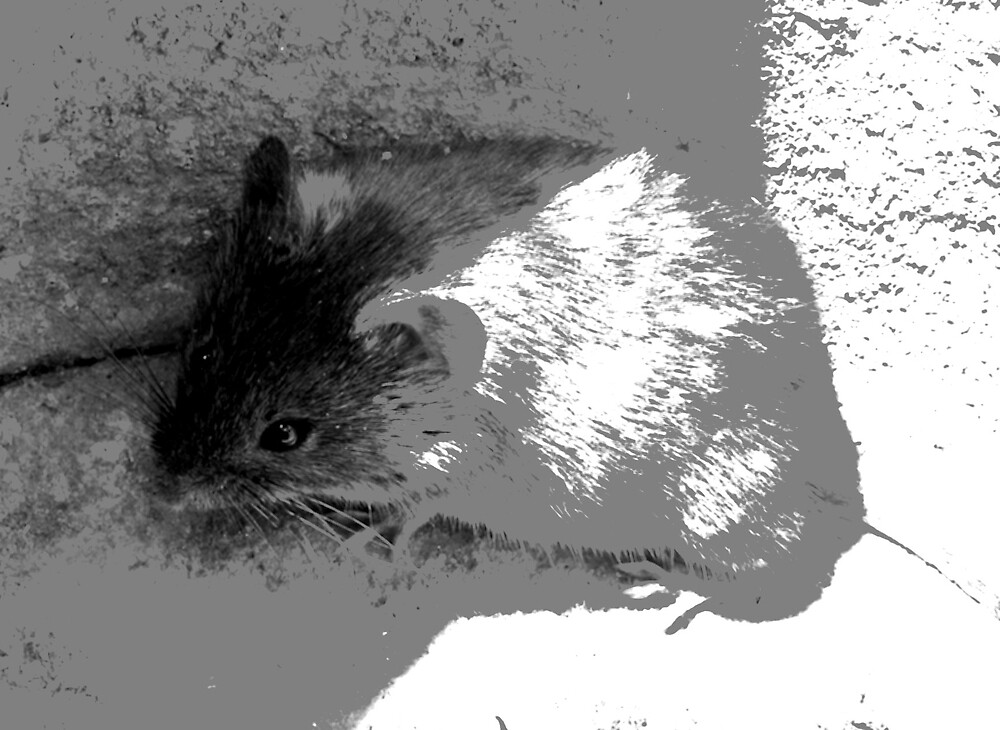 mouse by Jessica  Taylor-Cassan