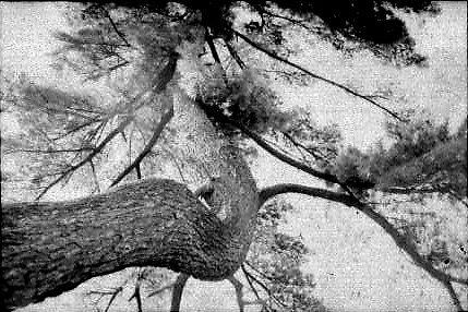 Tree Up by April Webb