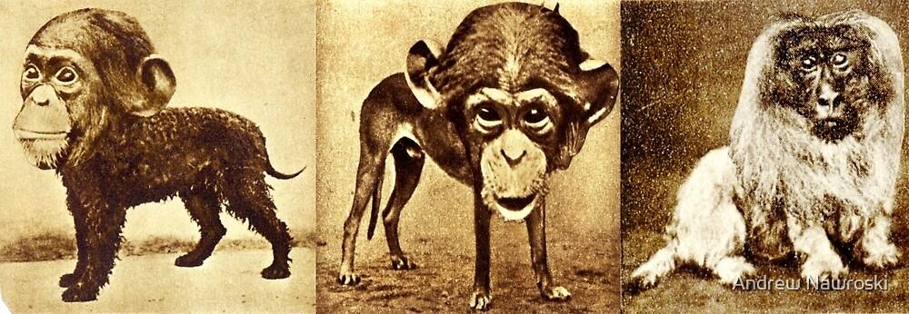 Monkey Business 3. by Andrew Nawroski